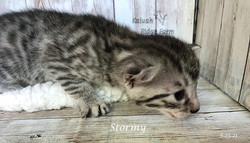 Stormy 5.23.21a