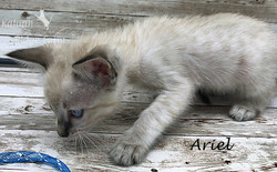 Ariel - Female Snow 8.2.2020c