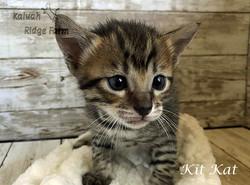 Kit Kat 3.20.21a