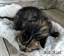 Kit Kat 3.6.21d