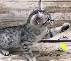 Zoey 12.2020d