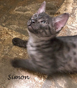 Simon 1.2021b
