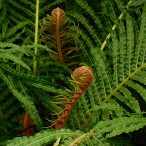 Essbare Wald- und Wiesenkräuter