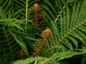 биологии растений