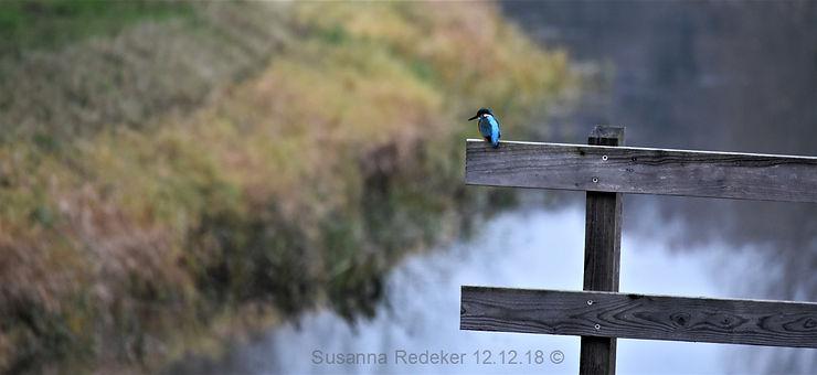 foto IJsvogel Ockhorstroute; Wichmond