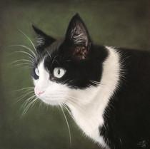 Hugo, Bondkatt