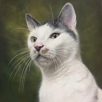 Henry, Bondkatt