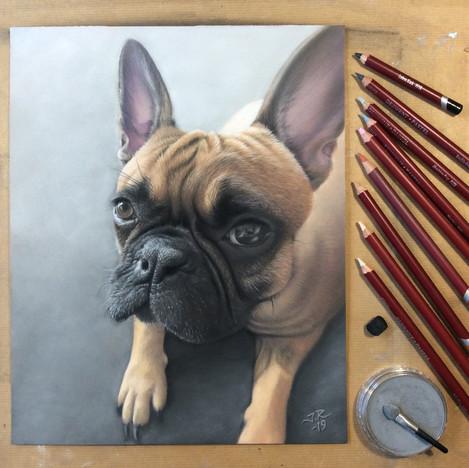 Ella, Fransk Bulldog
