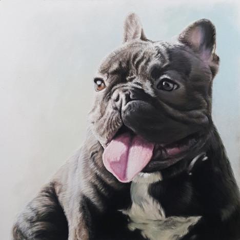 Kingi, Fransk Bulldog