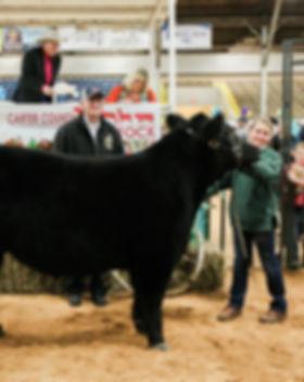 Reserve Steer.jpg