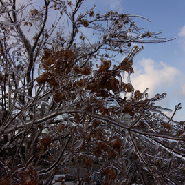 Ice Storm 6