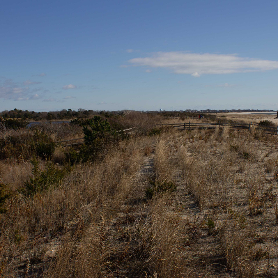 Cape May Dunes