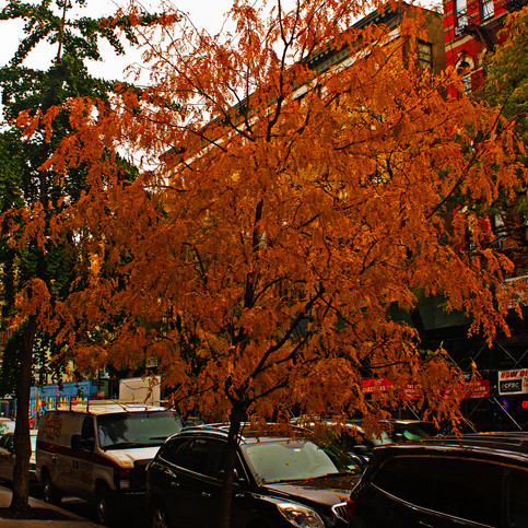 city fall colors