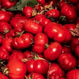seattle tomatos