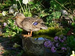 Dunvarlich House Bird Bath