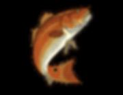 Redfish_Logo.png