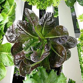 growbox-produce.jpg