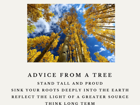Advice from a tree..