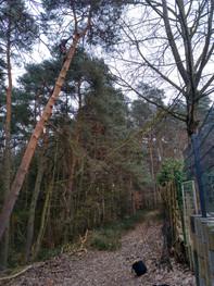 Unterstützung für den Forst