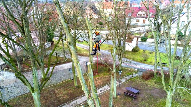 Komplexe Abtragung einer Linde im Stadtpark Spalt (Bayern) wegen eines Sturmschadens.