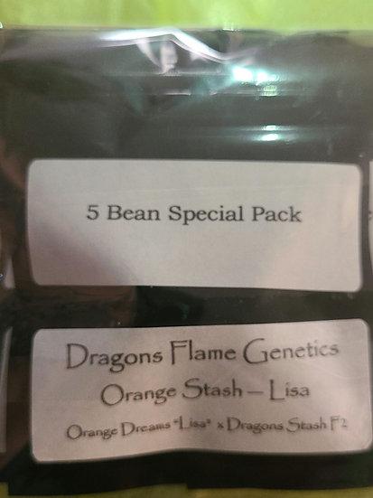 Orange Stash
