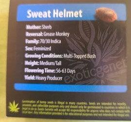 Sweat Helmet