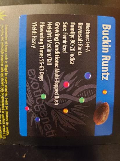 Buckin Runtz + Tropical Runtz Freebie