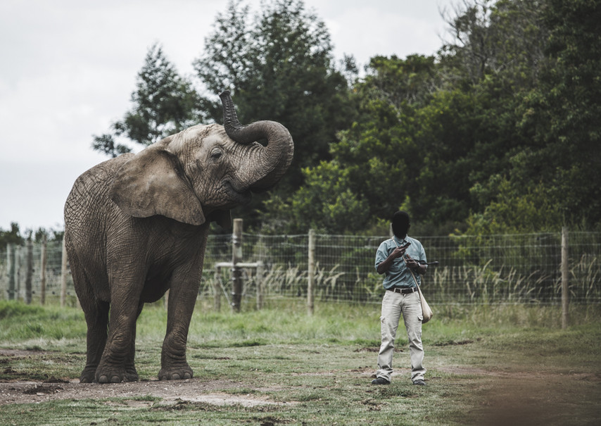 My Heartbreaking Experience at an Elephant Sanctuary