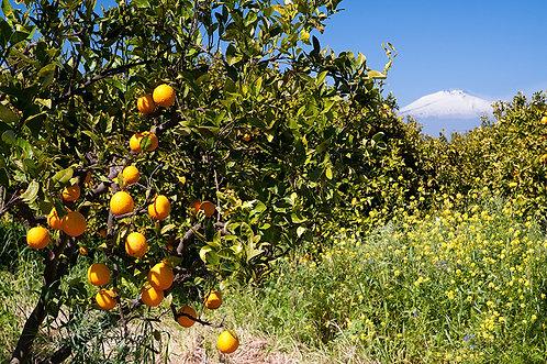 Sinnesduft: Siziliengarten
