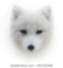 arctic-fox-front-view-portrait-260nw-631
