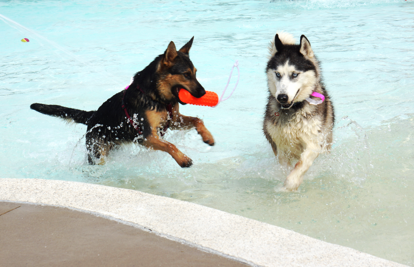 Take Your Pal to an Annual Dog Swim!