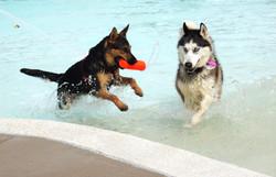 Take Your Pal to an Annual Dog Swim!