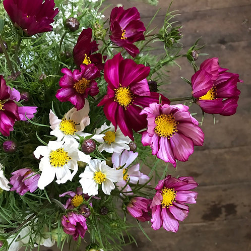 Summer Bouquet Subscription - 6 Weeks