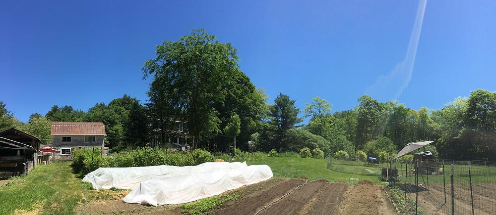 The garden expansion