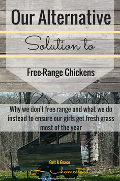 An Alternative to Free-Ranging Your Chickens