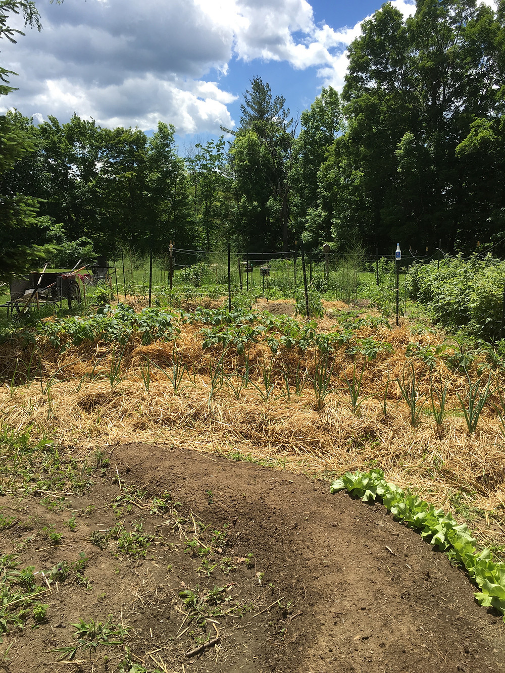 The first new garden in NH