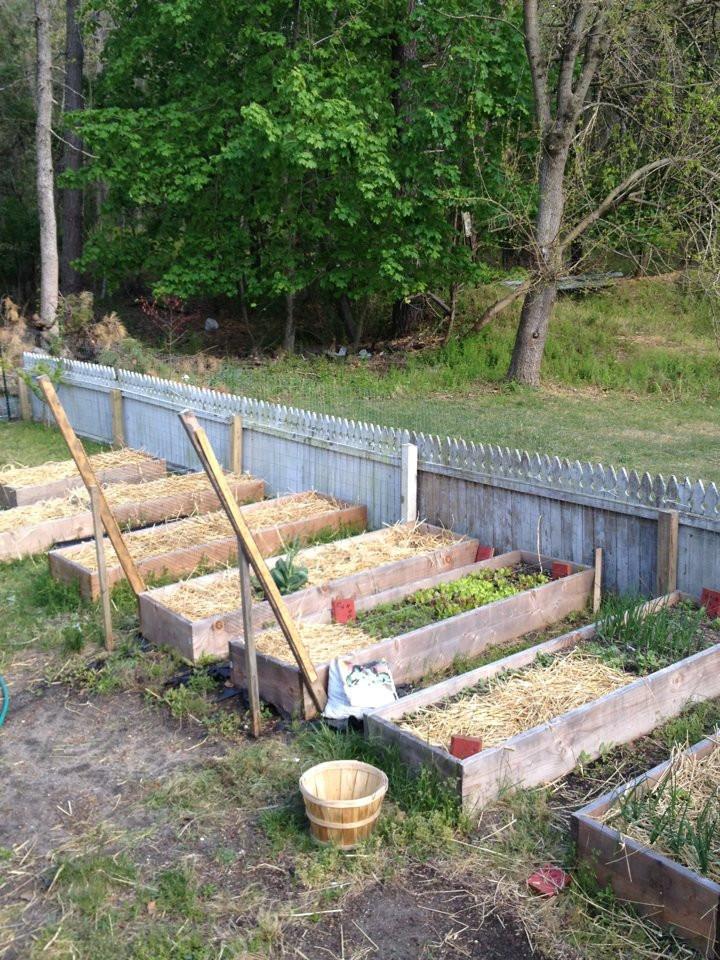 Our NJ garden