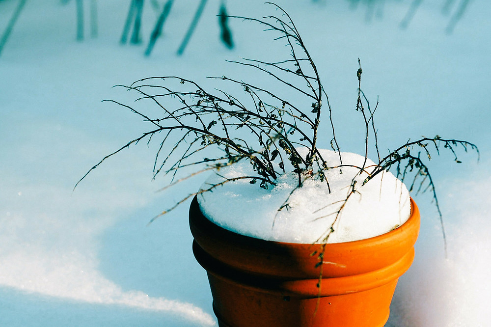Snow covered pot