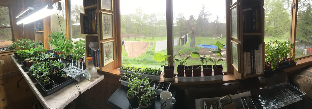 Starting seeds indoors