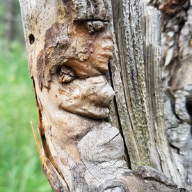 Eyes in Nature2 by_Merlyn_Holmes_Creativ