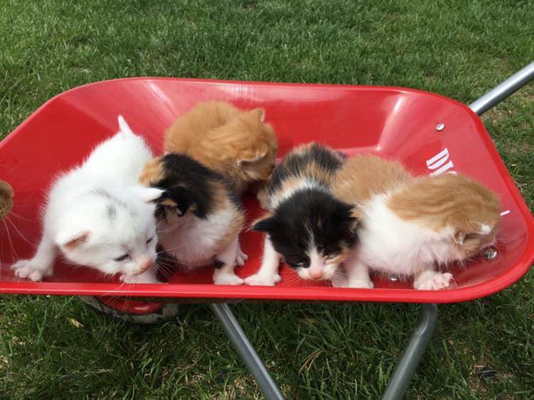 kittens - Copy.jpg