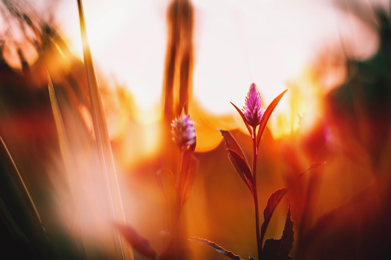 bloom-blossom-desktop-backgrounds-121204