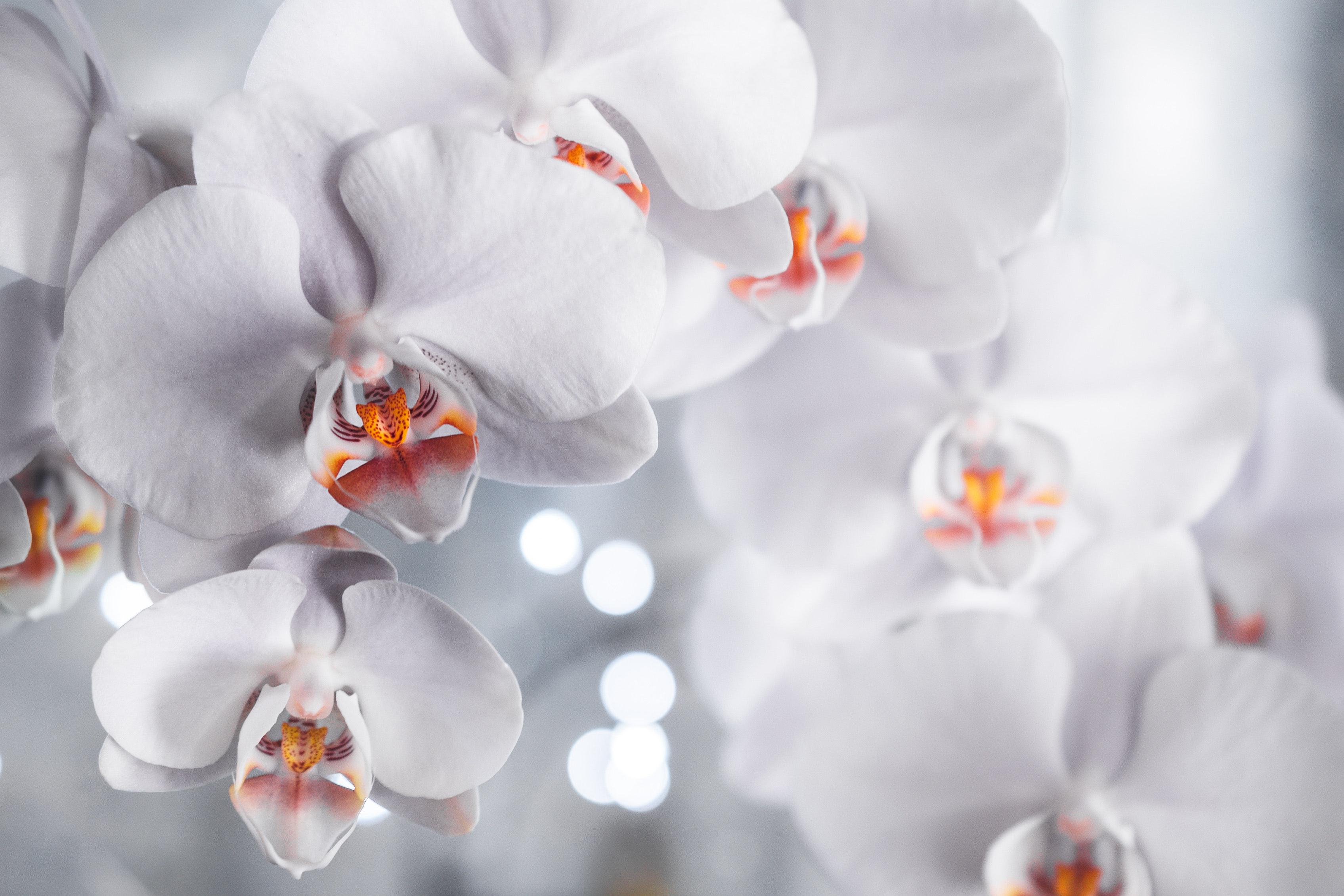 bloom-blossom-close-up-2291811