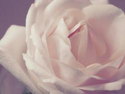 bloom-blossom-close-up-749563