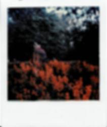 polaroid1gen.jpg