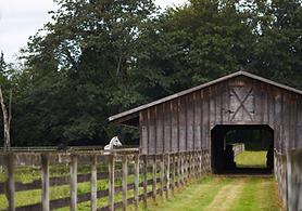 Horse Stall