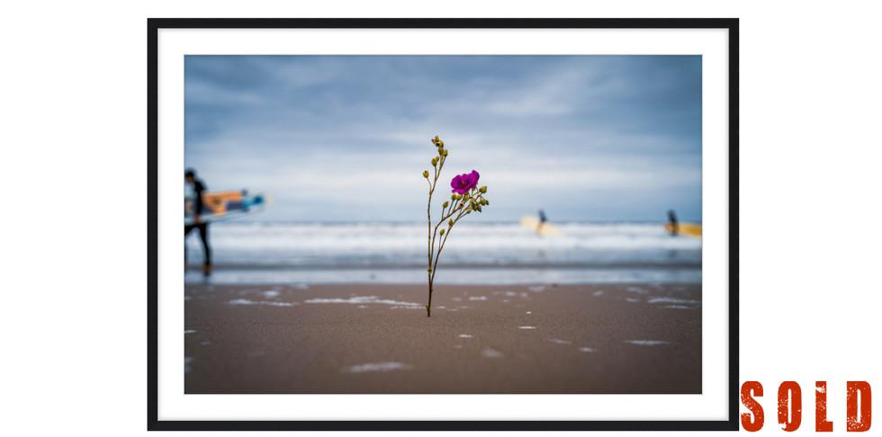 Flowers & Surfers