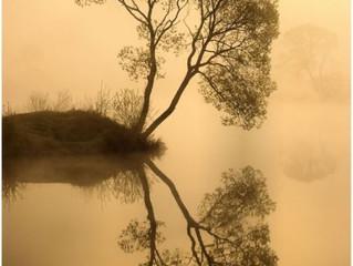 The World Tree.