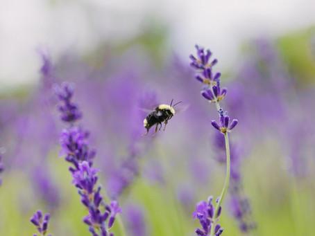 Top 10 Pollinator Flowers for Your Garden