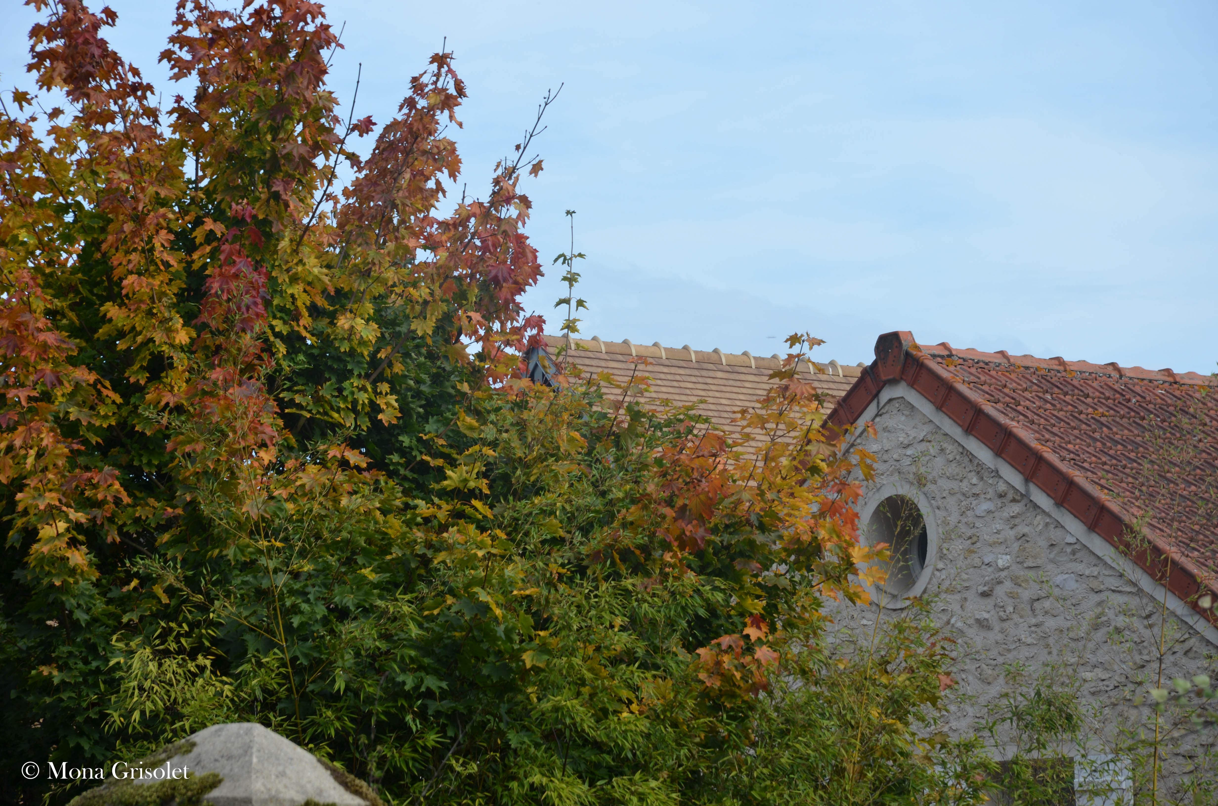 Architecture et végétal, La Falaise